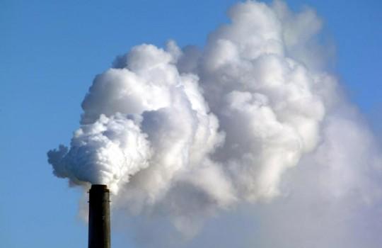 """Ministerio de Agricultura: """"El sector forestal es importante para mitigar el cambio climático"""""""