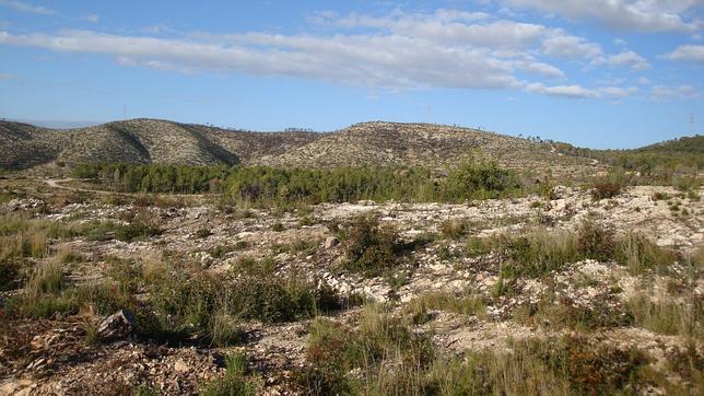 Los ecosistemas más jóvenes son los más sensibles al Cambio Climático