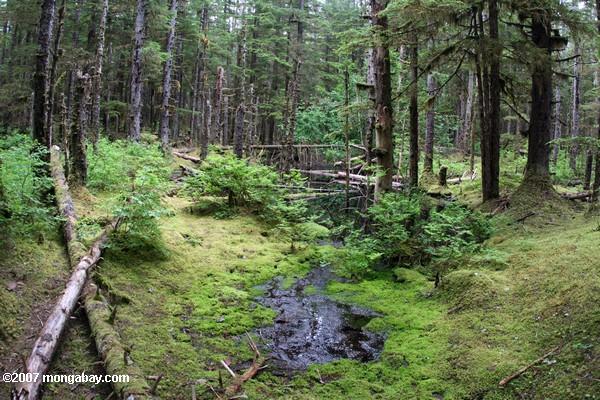 Los bosques templados de Chile sufrirán el cambio climático de distinta forma