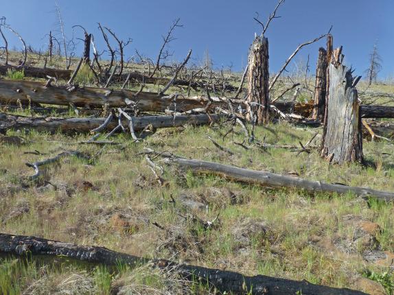 Desempeño ambiental de Chile y ausencia de espacios reales para la participación ciudadana
