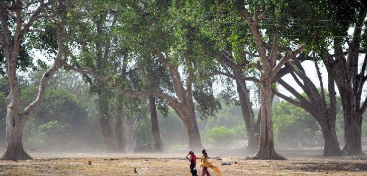 Más de 800 muertos deja ola de calor que abrasa India desde hace una semana