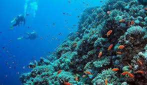 Unesco destaca el papel vital de los océanos en el cambio climático
