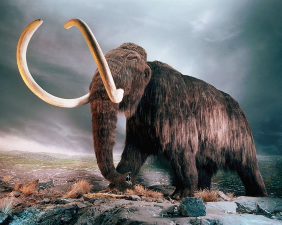 Un violento cambio climático fue el causante de la desaparición de los mamuts