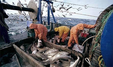 Estudio publicado en Science advierte los efectos del cambio climático sobre la industria pesquera
