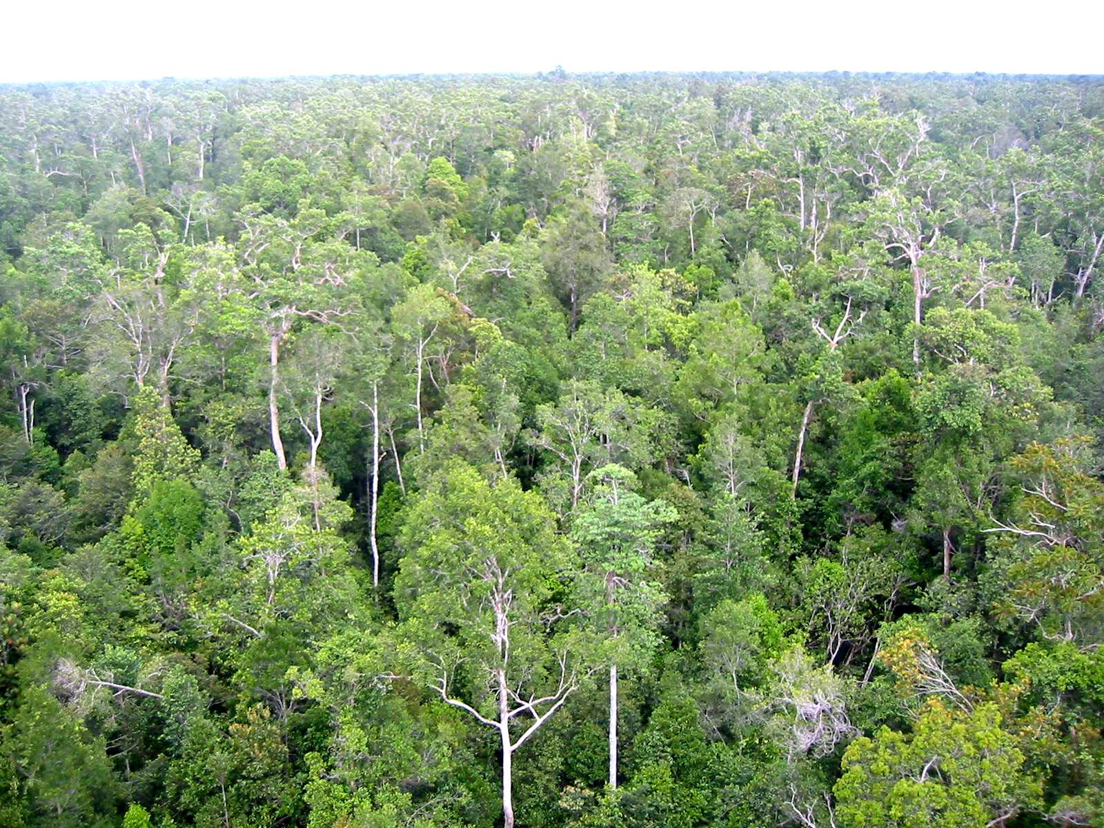 La COP-21 busca que los bosques sean un instrumento de lucha climática