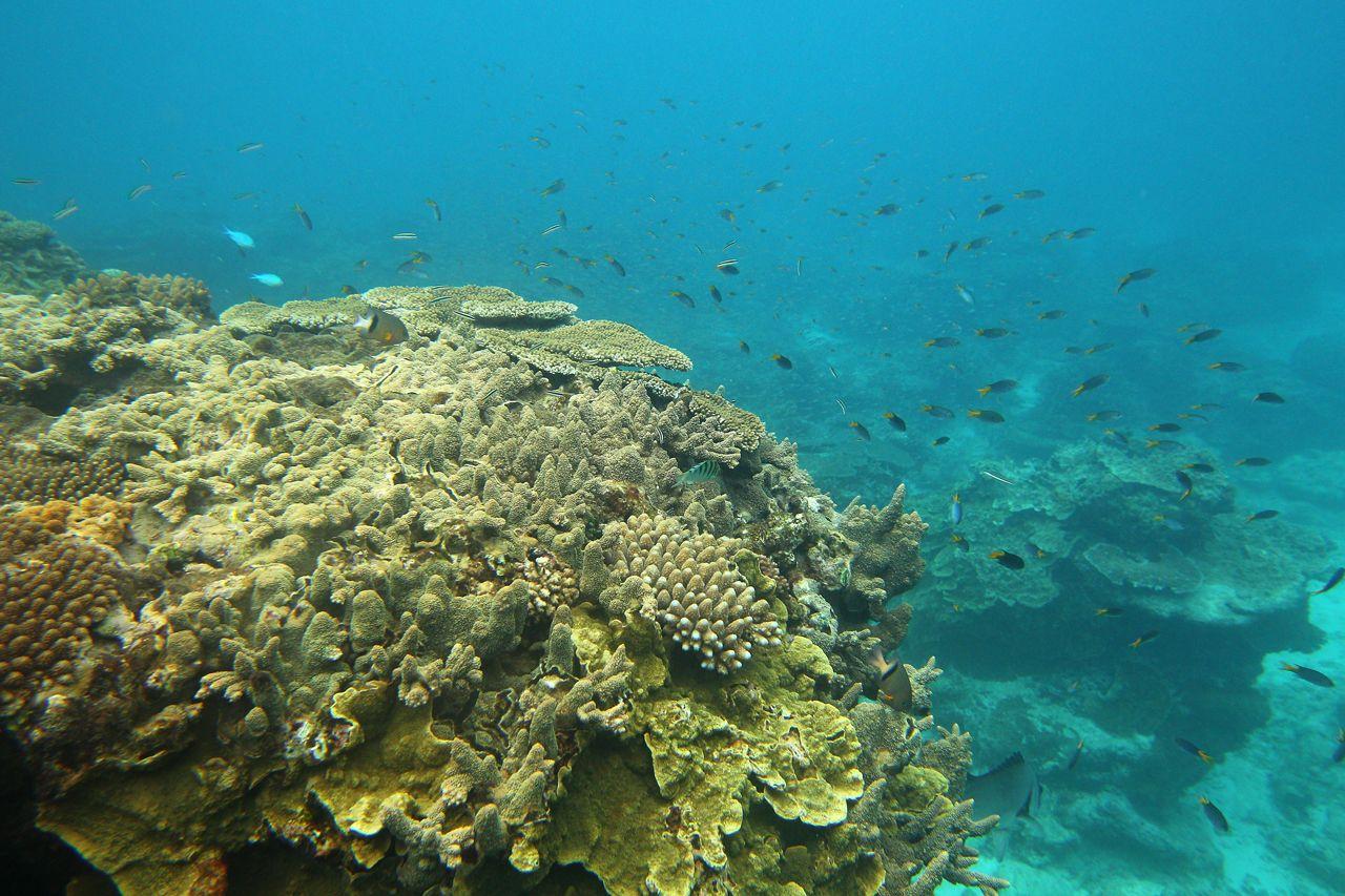 Cambio climático provoca la muerte de arrecifes de coral en El Salvador