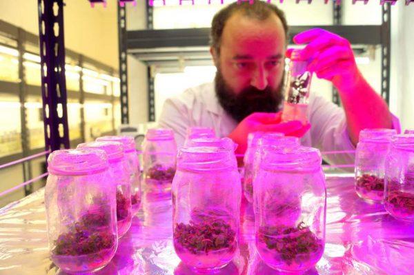 Crean plantas tolerantes al cambio climático